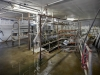 3320_nw_stahancyk_milking_room_01
